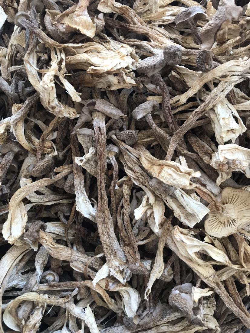 [鹿茸菇批发]鹿茸菇、产地一手货源、工厂化生产、质量上乘、品质保证正品价格33元/斤