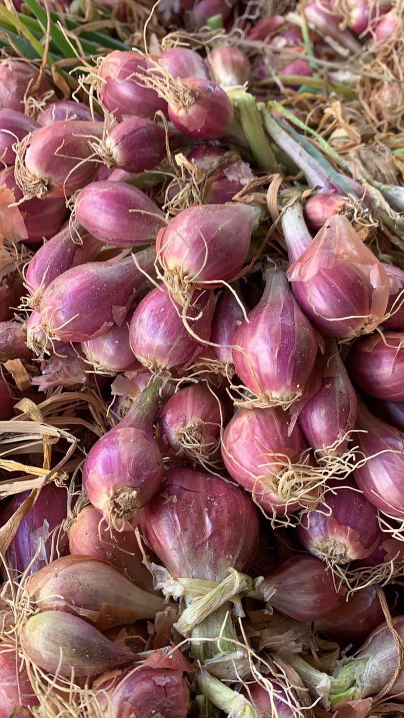[红葱头批发]广东新葱 红葱头 带苗不带苗皆有 长期供应量大价优价格2.8元/斤
