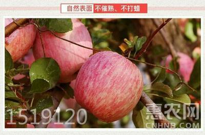 紅富士蘋果 脆甜多汁可以帶皮吃,5斤裝包郵