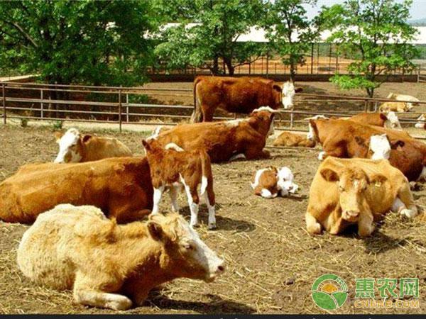 牛场的卫生防疫措施及常见病的防治技巧