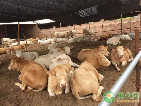 牛常见病的防治