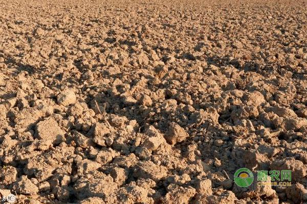*壤连作障碍的原因分析及抑制技术
