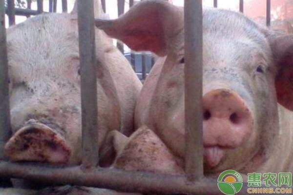 完善种猪的疫病防控体系