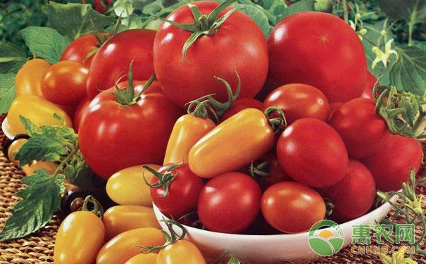番茄根结线虫病农业防治措施