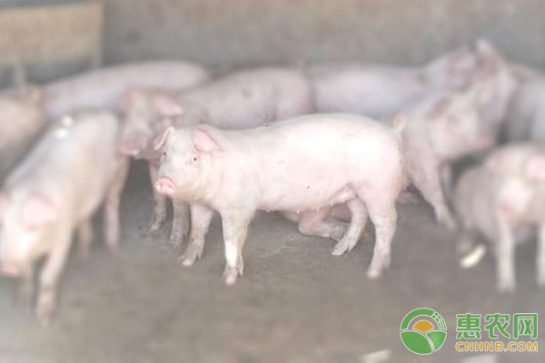 环保养殖方法:粪污资源化利用方式