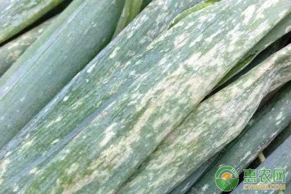 香葱病虫害防治图片