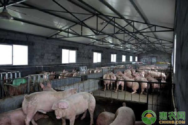 猪场磺胺药物中毒的症状及解救方法