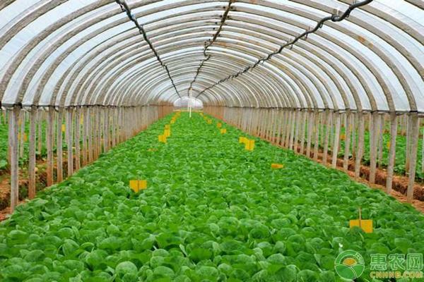 蔬菜种植妙招