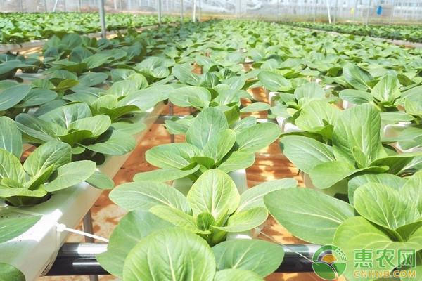 浅谈腐植酸在水培蔬菜中的应用