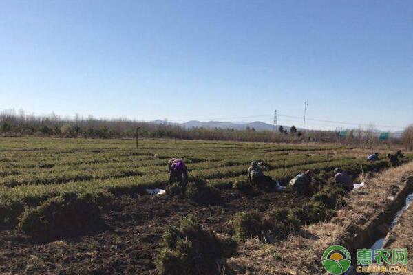林业苗圃常用除草剂类型及增强药效措施