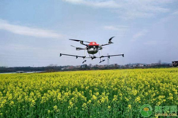 无人机喷雾施药的效果更为明显