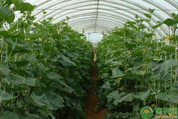 浅谈棚室蔬菜高产优产种植的六大施肥技巧