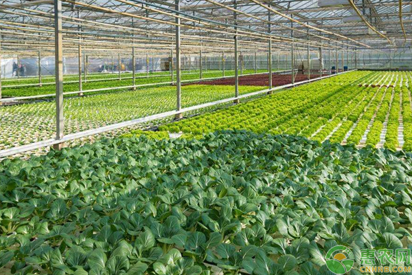 棚室蔬菜高产优产种植技巧