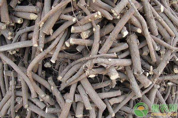 新疆地区甘草滴灌高产栽培技术要点