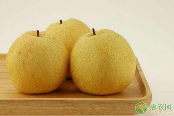 基金项目:砀山酥梨及其育种利用价值