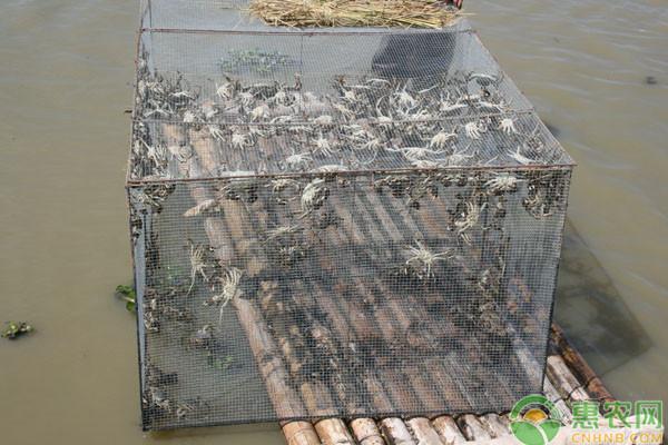 螃蟹养殖高温期的管理技术要点
