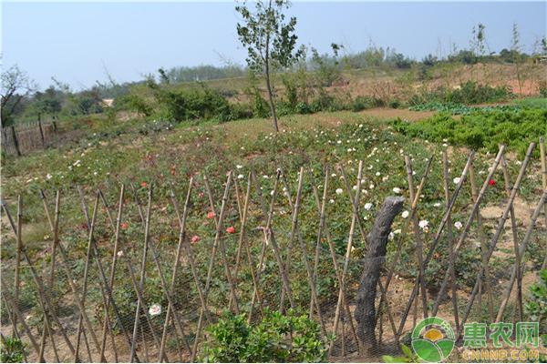 大棚蔬菜秧苗