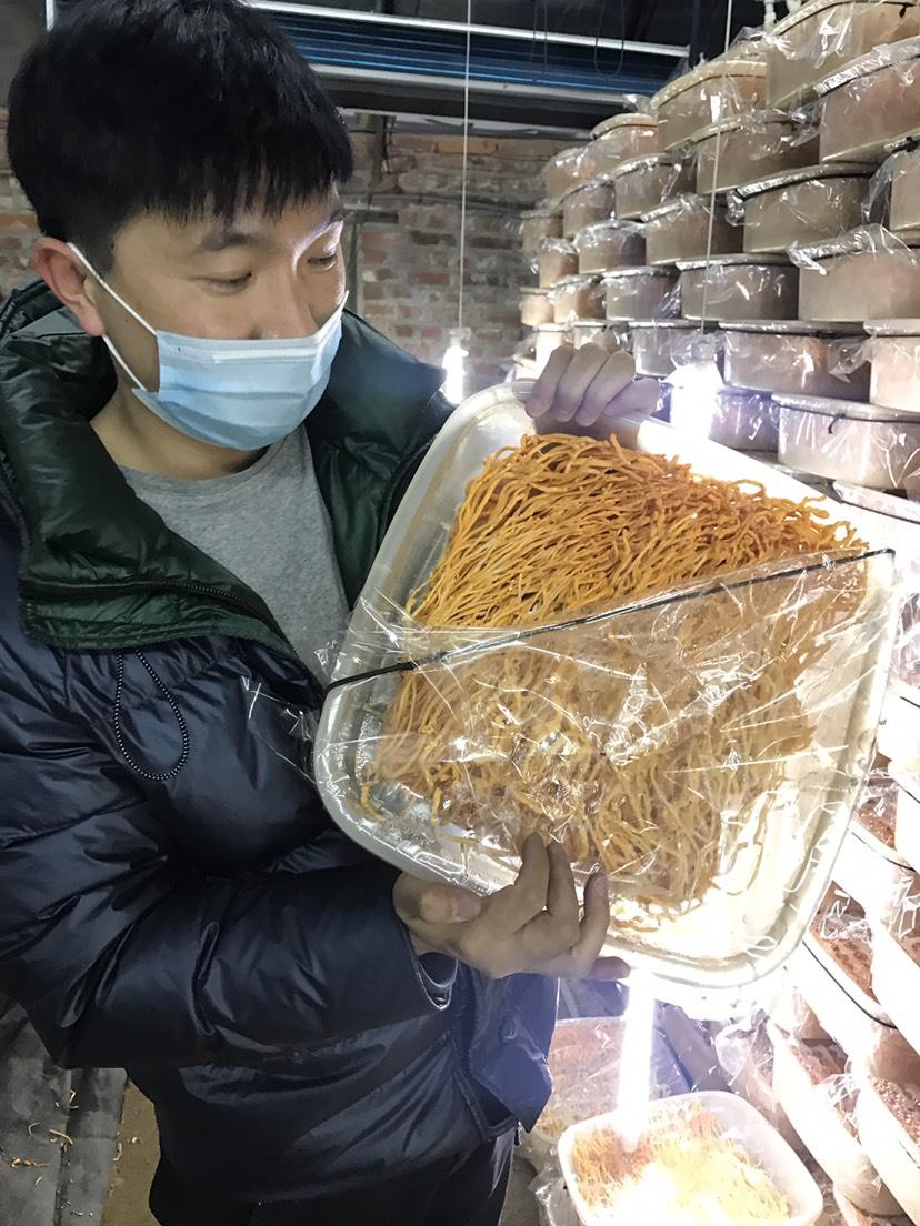 [北虫草批发] 虫草花 北虫草 农户直发 天然无添加 平价煲汤必备价格20元/斤