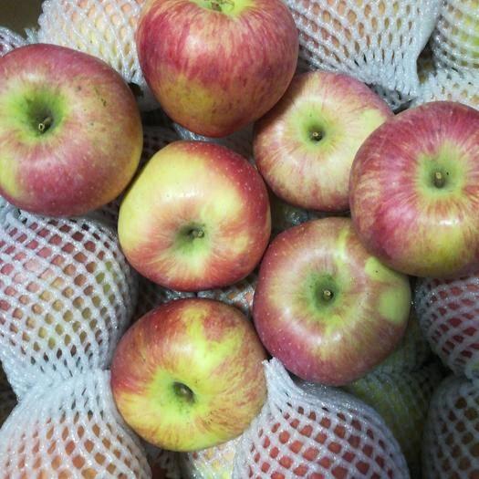 山東省淄博市張店區紅香蕉蘋果 膜袋 片紅 80mm以上
