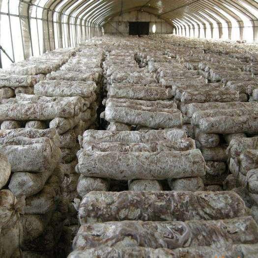 贵州省黔南布依族苗族自治州荔波县香菇菌种