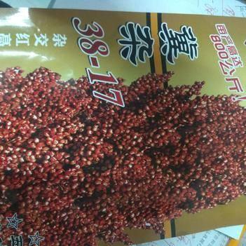 紅高粱種 種子