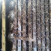 土蜂蜜 盒裝 100% 2年以上