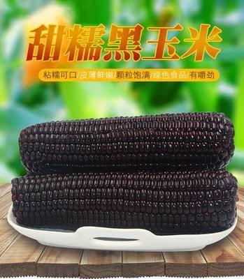 山西省忻州市忻府區甜糯玉米 黑粒 鮮貨