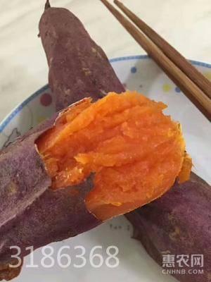六鰲地瓜 紅皮 1~3兩