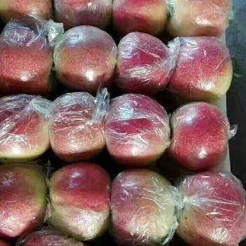 美八蘋果 膜袋 片紅 75mm以上