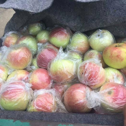 山東省濰坊市寒亭區美八蘋果 膜袋 片紅 75mm以上