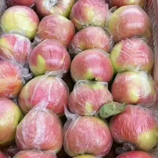 山東省臨沂市沂水縣美八蘋果 膜袋 片紅 75mm以上