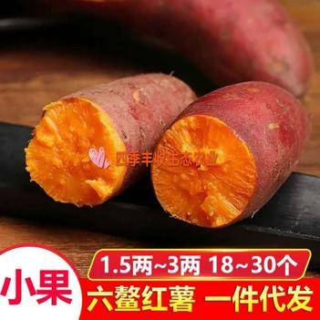 六鰲地瓜 六鰲小蜜薯