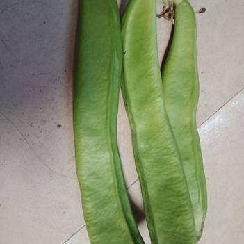 蔓生刀豆 10cm以下