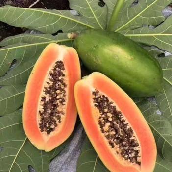 紅心木瓜 凈重9斤全國包郵一件代發