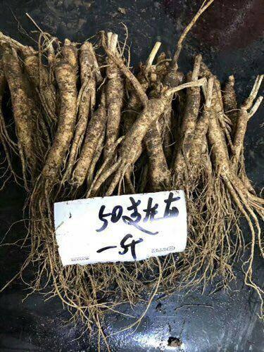 吉林省通化市通化县 人参,鲜人参,一斤50到60颗左右,0.98元一颗
