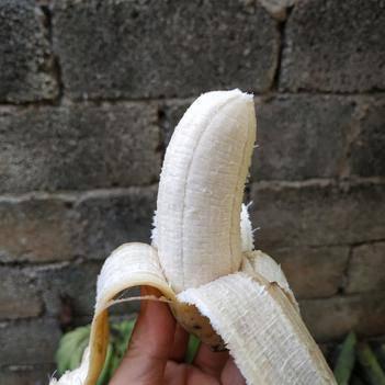 西貢蕉 粉蕉小果 特惠8斤 包郵