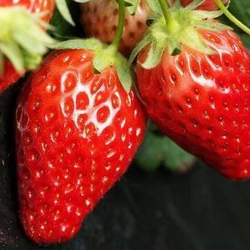 奶油草莓苗 帶土發貨 帶種植資料