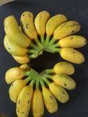 小米蕉 五斤裝 包郵 果園直銷一件代發