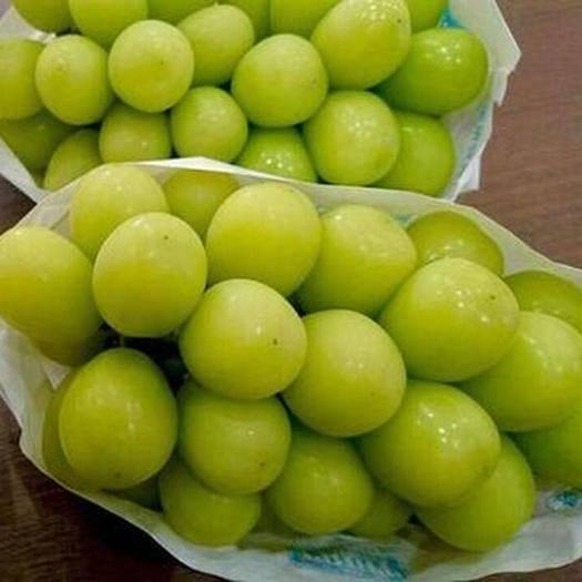 云南省红河哈尼族彝族自治州个旧市 空运云南阳光玫瑰晴王青提新鲜水果无籽葡萄香印提子