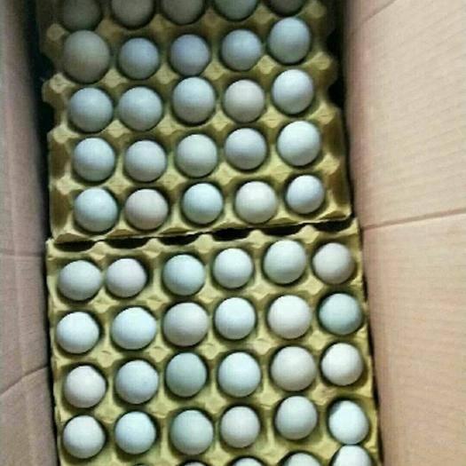 湖南省長沙市長沙縣土雞蛋 綠殼蛋420枚,凈重41一42斤的精品綠蛋