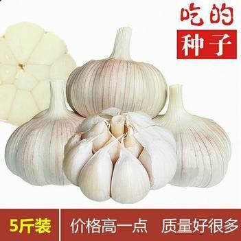 金鄉大蒜 五斤包郵