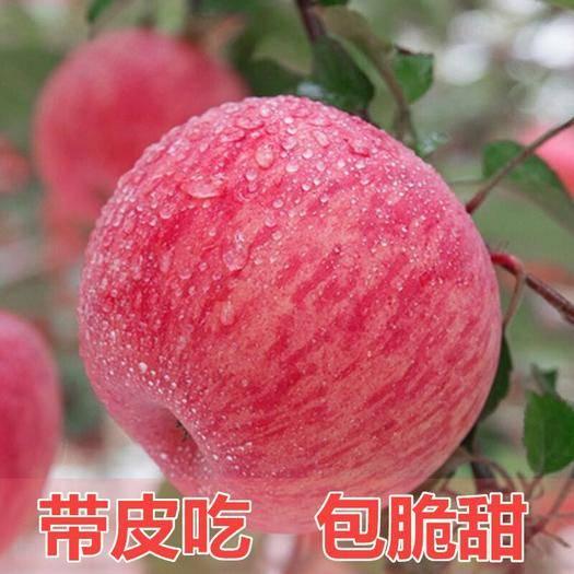 重慶市云陽縣紅富士蘋果 紙袋 片紅 80mm以上