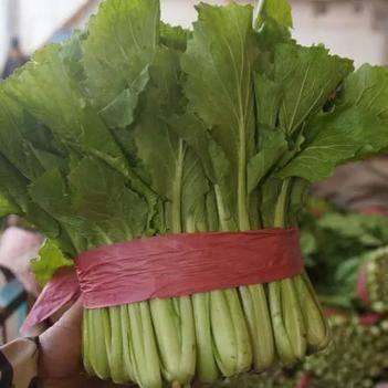 皇妃小白菜 20~25公分