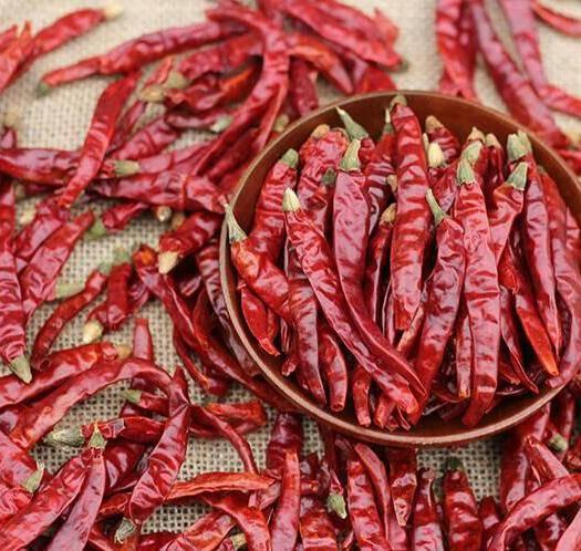 印度魔鬼椒 超辣干辣椒 五斤及以上全国包邮