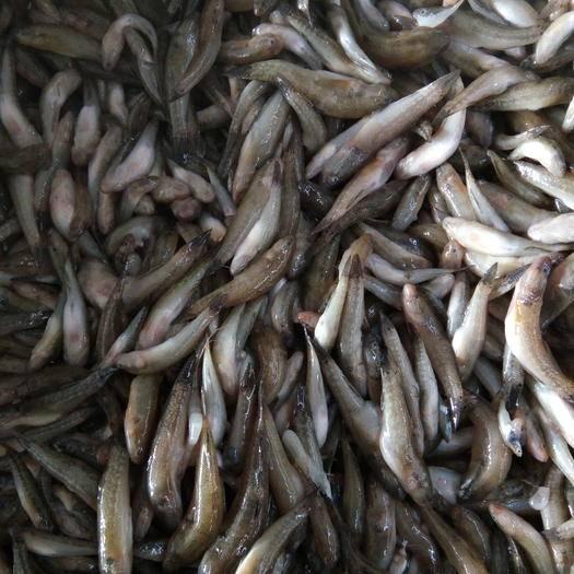 山東省東營市東營區沙光魚