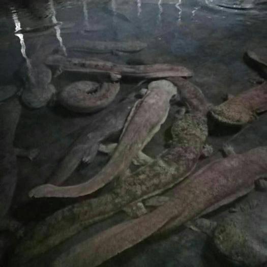 廣東省江門市蓬江區蛙魚