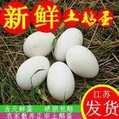 鮮鵝蛋 食用 箱裝