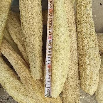 絲瓜絡 30~50cm