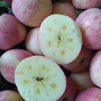 阿克蘇冰糖心蘋果 阿克蘇紅旗坡冰糖心套袋果一級果開始預售10月中旬上市鮮果