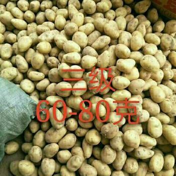 荷兰15号土豆 1~2两
